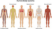 Illustration of different systems of human body