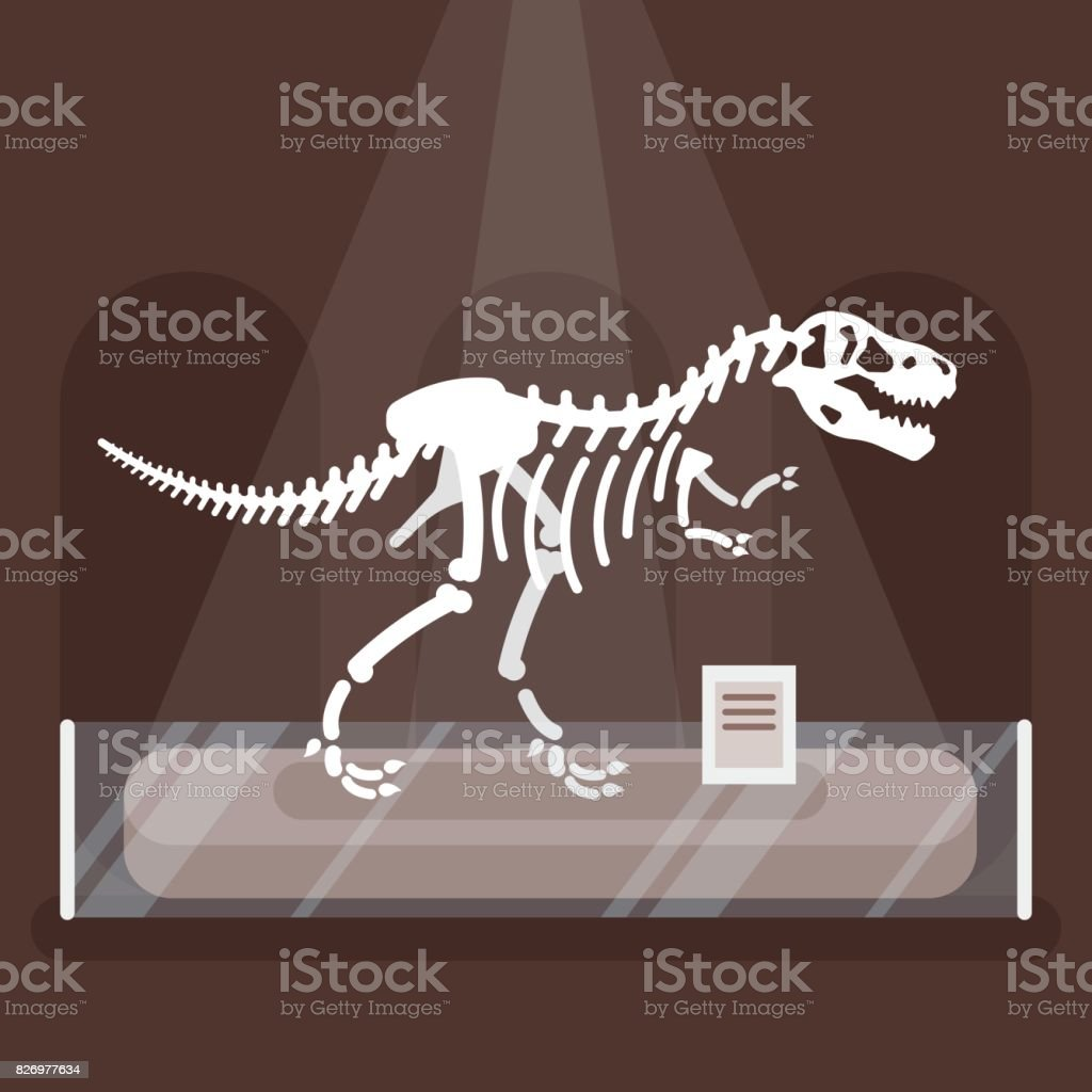 illustration of dinosaur skeleton in museum. vector art illustration