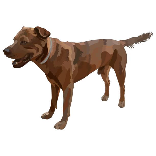 illustration des hundes. plott hound - vizsla stock-grafiken, -clipart, -cartoons und -symbole