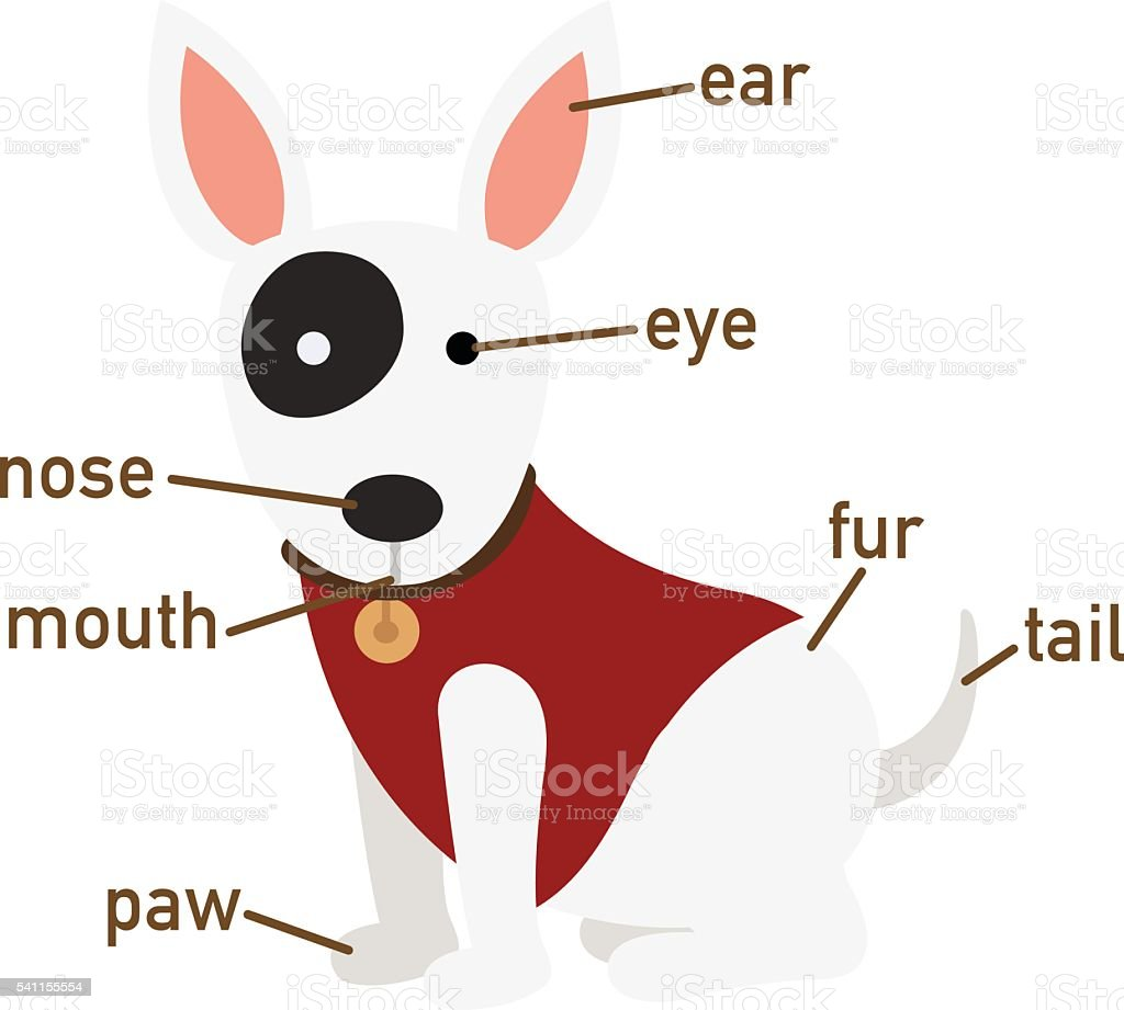 Illustration Of Dog Vocabulary Part Of Body Stock Vector Art & More ...