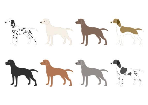 abbildung von hunden - vizsla stock-grafiken, -clipart, -cartoons und -symbole