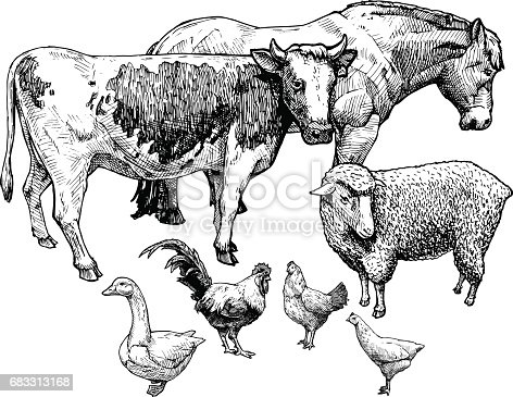 Vector hand drawn illustration of farm animals in vintage engraved style. Draft horse, cattle, sheep, goose, cock and hen.