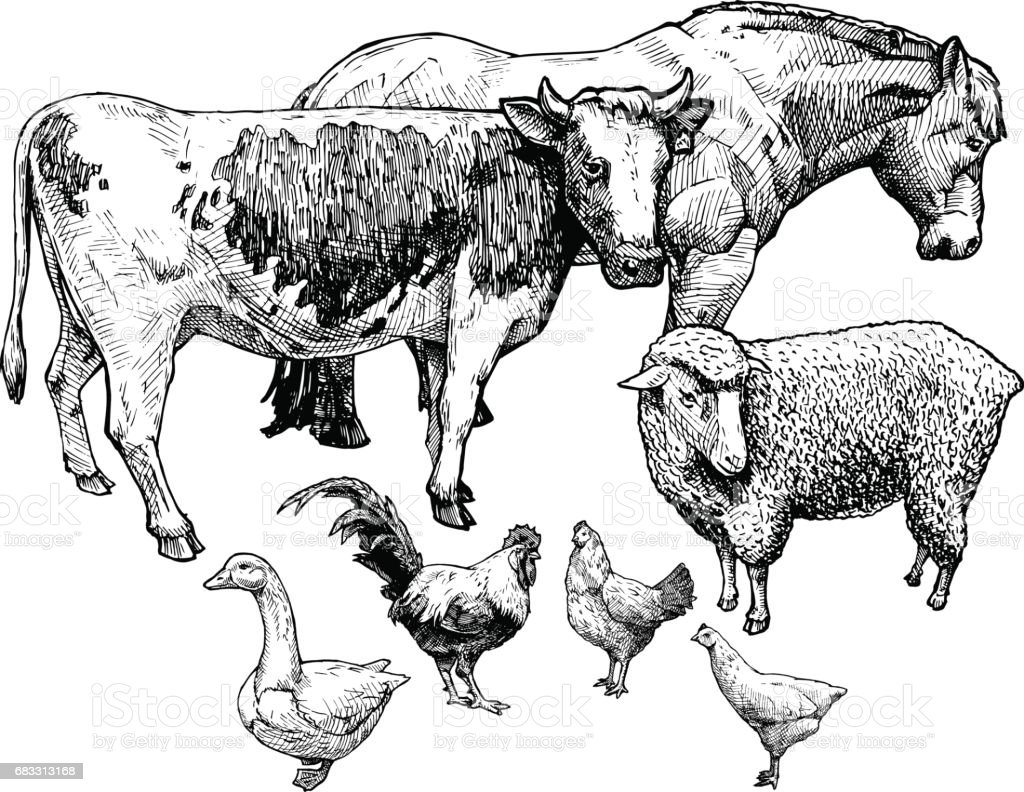 illustration of farm animals vector art illustration