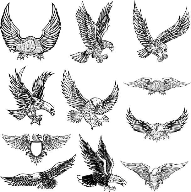 illustrations, cliparts, dessins animés et icônes de illustration de l'aigle qui vole isolé sur fond blanc. - aigle