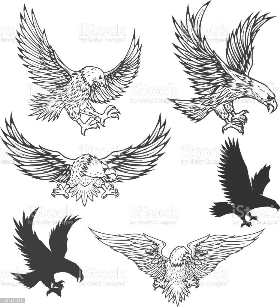 Dibujo de águila volando aislado sobre fondo blanco. Ilustración de vector. - ilustración de arte vectorial