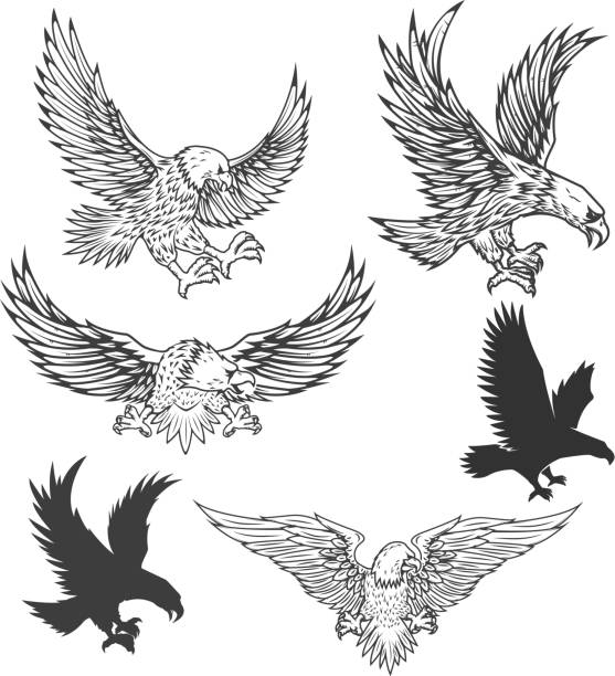 illustrations, cliparts, dessins animés et icônes de illustration de l'aigle qui vole isolé sur fond blanc. illustration vectorielle. - aigle