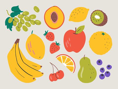 Illustration of fresh fruit — hand-drawn vector elements