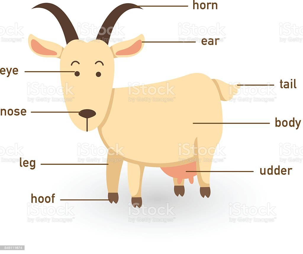 Illustration Of Goat Vocabulary Part Of Body Stock Vector Art & More ...