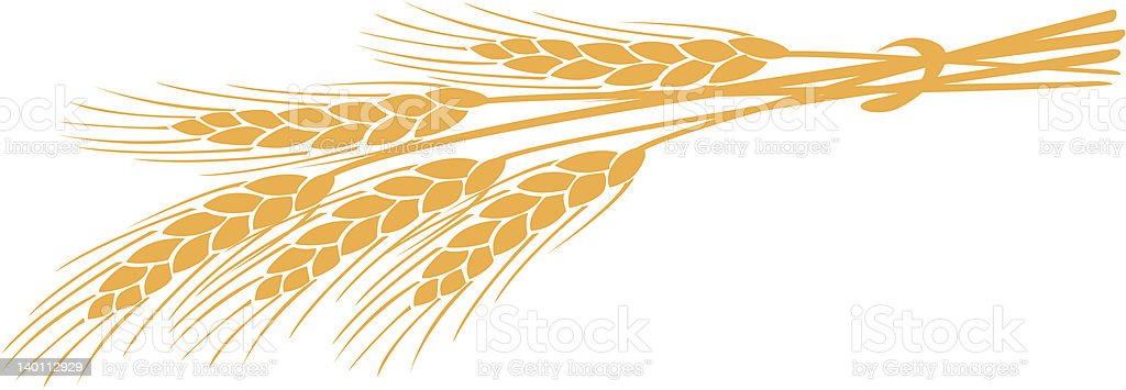 Illustration of golden head of wheat on white background vector art illustration