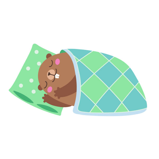illustration of groundhog sleeping under a blanket. flat - hibernation stock illustrations