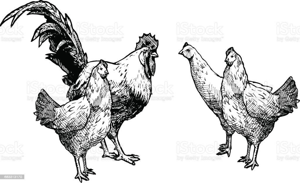 Clip cock fighting