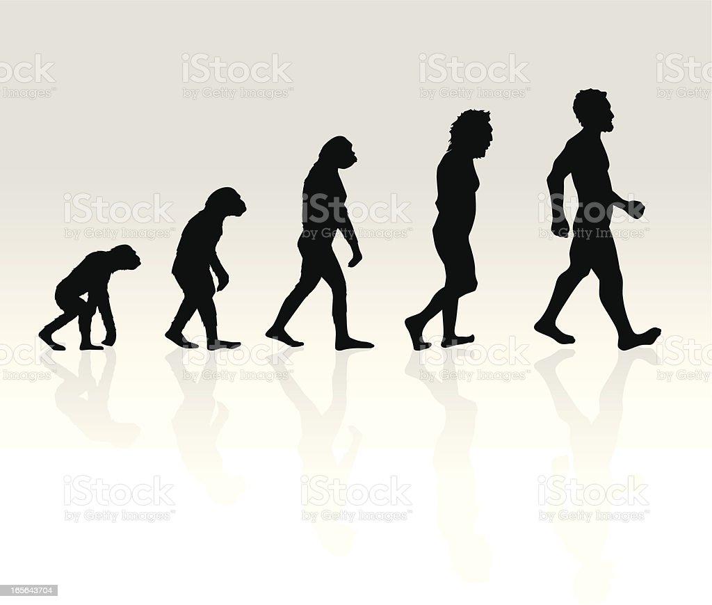 Illustration of Human Evolution vector art illustration