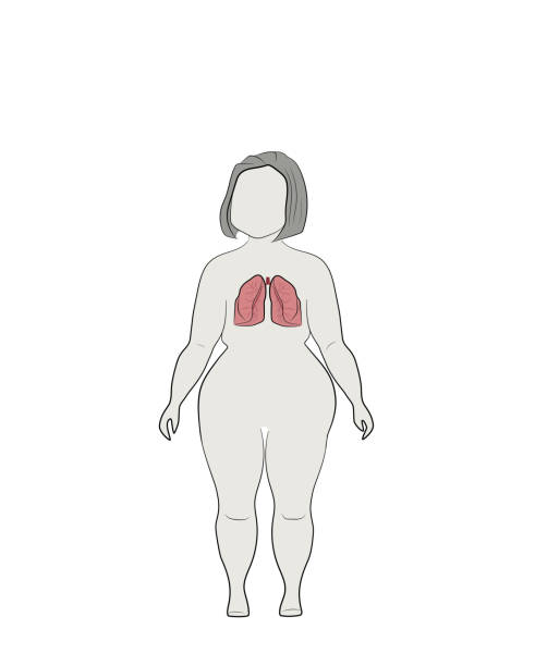 a9d83f7e75f Illustration of human lungs on a silhouette of a full woman. vector  illustration. vector
