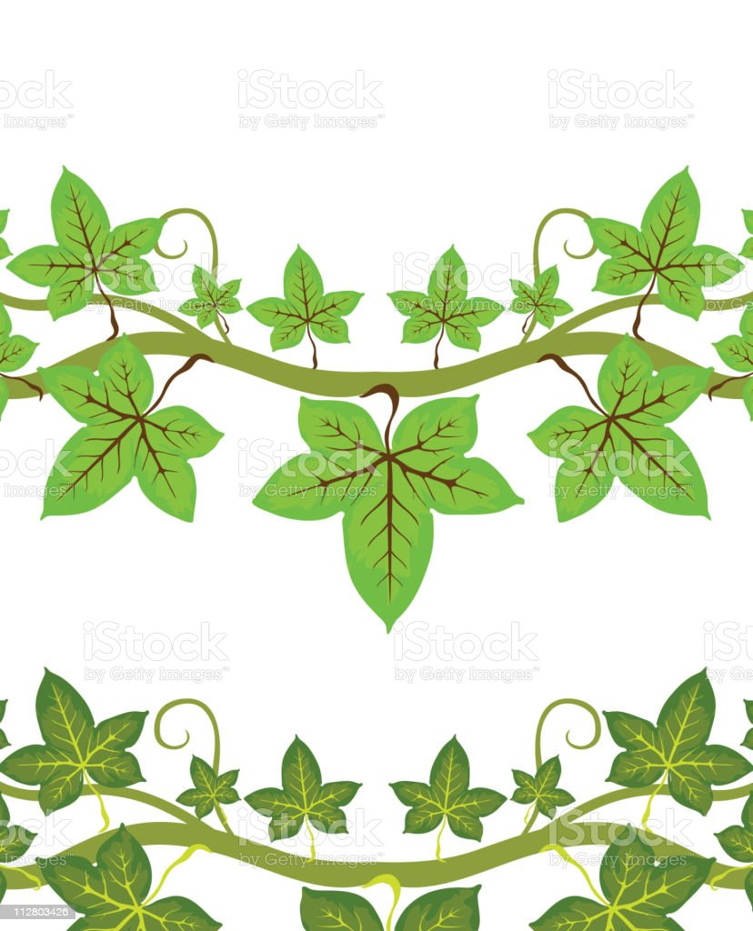 Illustration of ivy plant vector art illustration