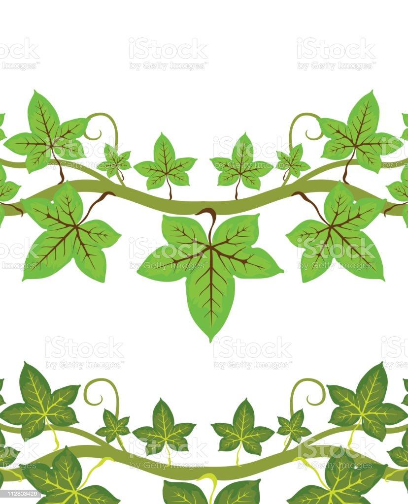 Illustration of ivy plant vector art illustration