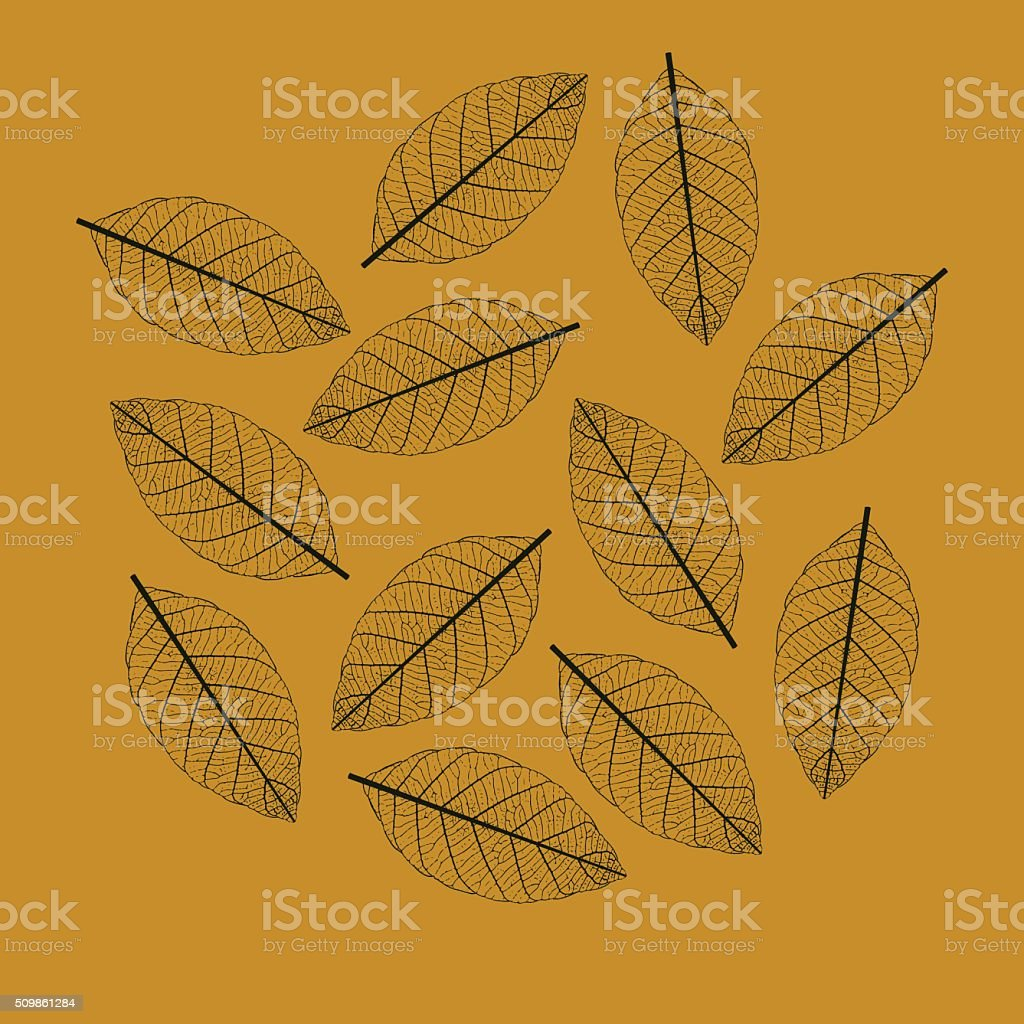 Illustration of Leaf Skeletonization vector art illustration