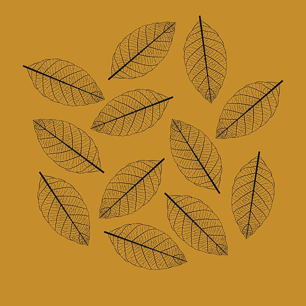 illustration of leaf skeletonization - animal skeleton stock illustrations