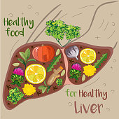 vector illustration of liver filled with food herbs and spices  good for it's health