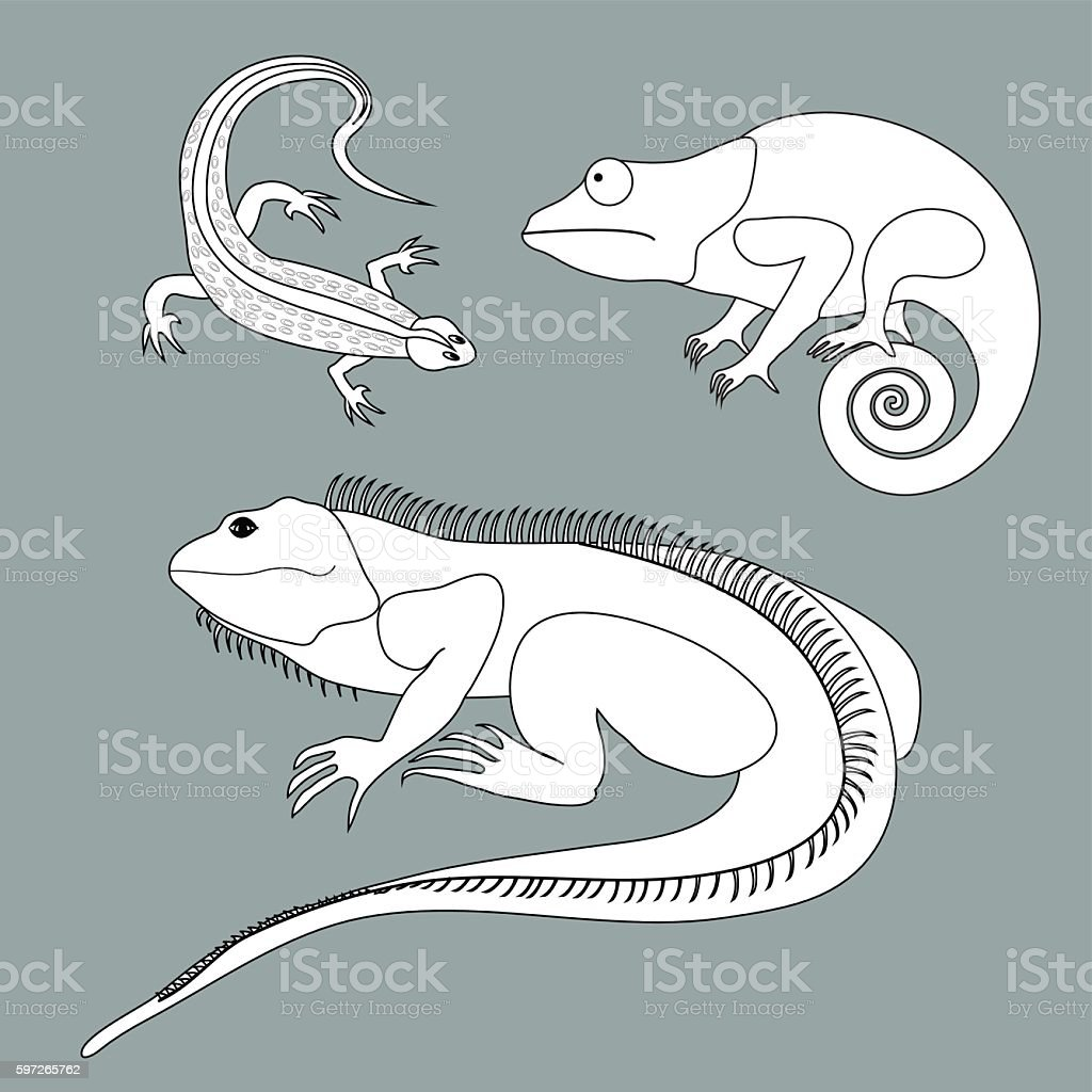 Illustration of lizard, chameleon, iguana in black and white colors illustration of lizard chameleon iguana in black and white colors – cliparts vectoriels et plus d'images de cache libre de droits