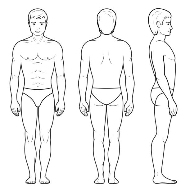 Illustration of male figure Vector illustration of male figure - front, back and side view in outline chest torso stock illustrations