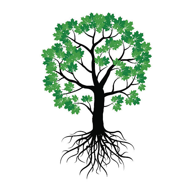 Royalty Free Maple Tree Clip Art Vector Images Amp Illustrations