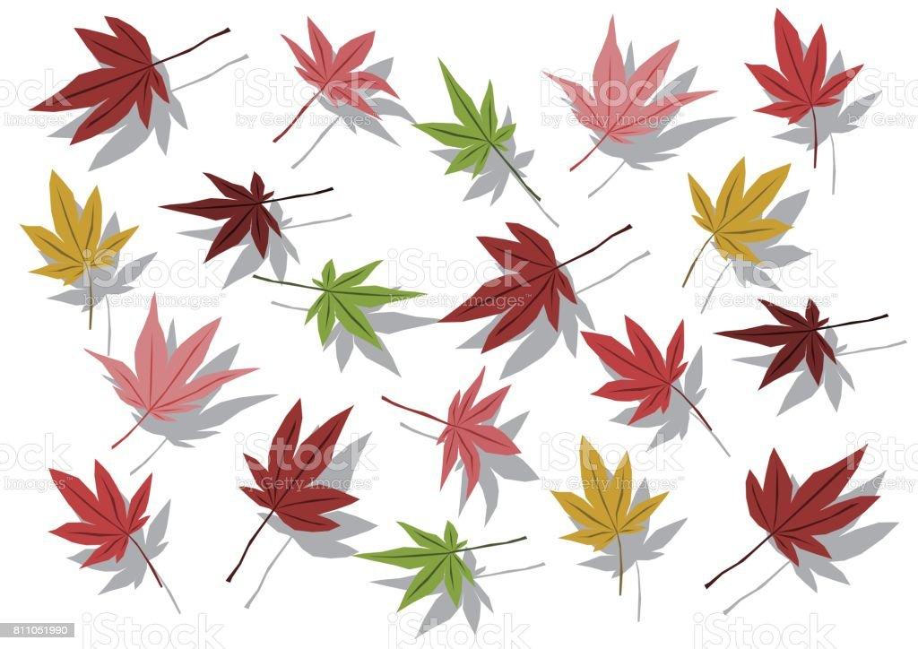 Illustration of maple vector art illustration