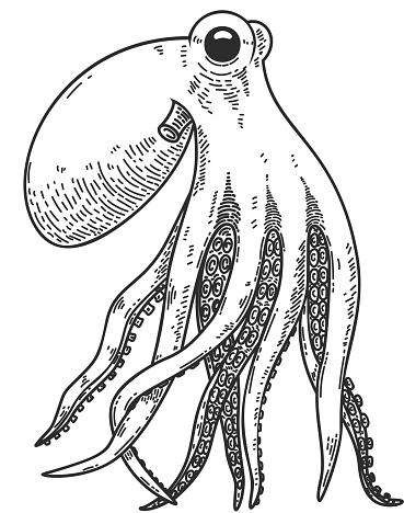 Illustration of octopus in engraving style. Design element for poster, card, banner, sign. Vector illustration