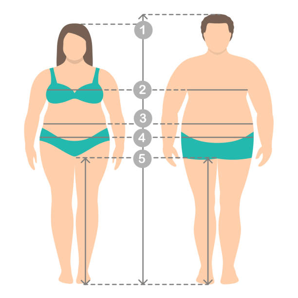 illustrazioni stock, clip art, cartoni animati e icone di tendenza di illustration of overweight man and women in full length with measurement lines of body parameters . man and women clothes plus size measurements. - obesity
