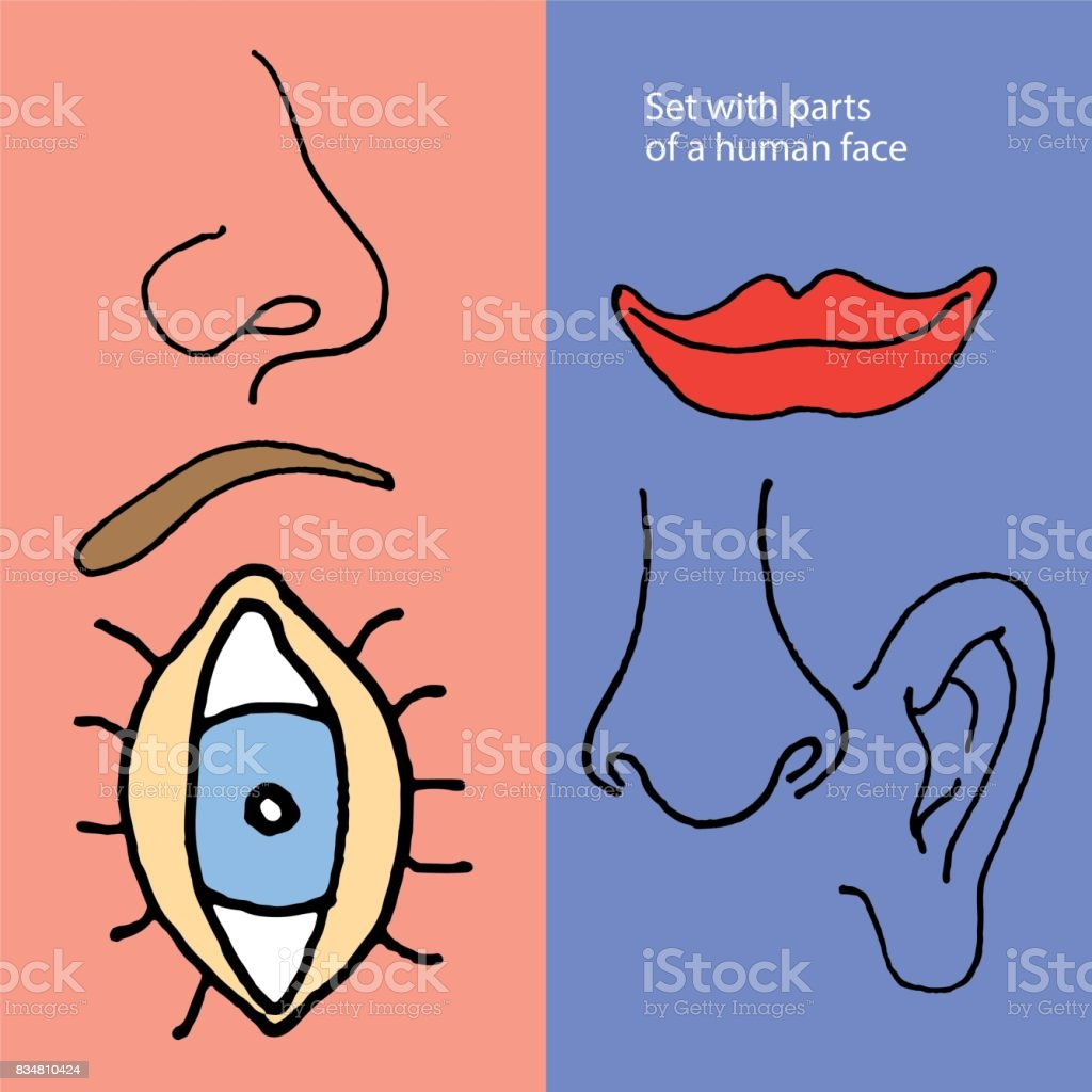 Illustration of parts of a human face vector art illustration