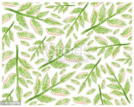 istock Illustration of Pedilanthus Tithymaloides or Redbird Cactus Background 1302608156