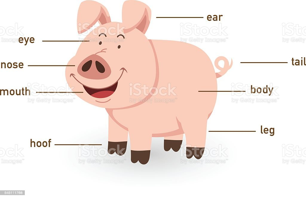 Illustration Of Pig Vocabulary Part Of Body Stock Vector Art & More ...