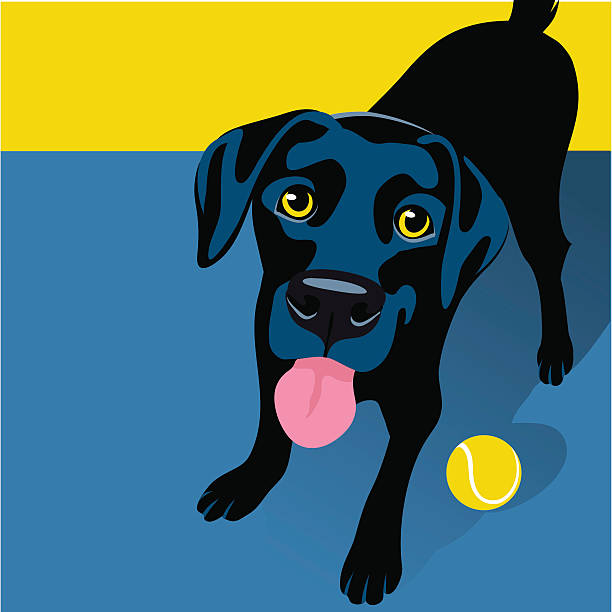 ilustrações de stock, clip art, desenhos animados e ícones de illustration of playful black labrador retriever with tennis ball - happy dog