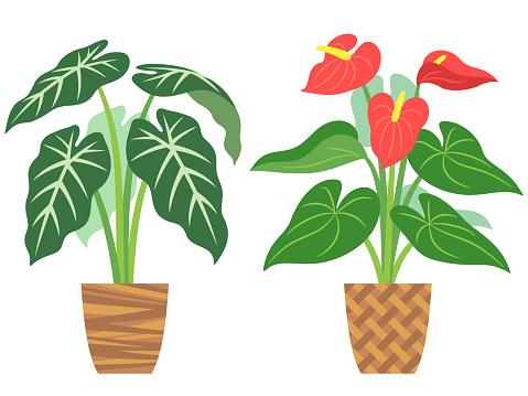 Illustration of potted foliage plants