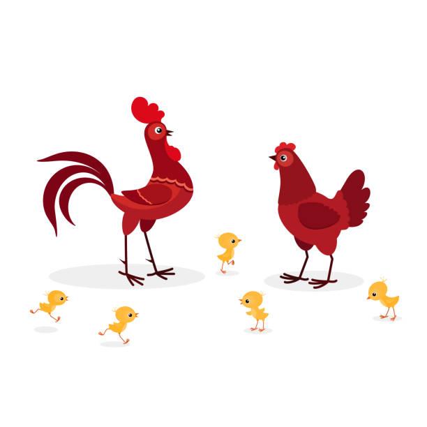 Illustration de famille rouge de poulet isolée sur le fond blanc - Illustration vectorielle