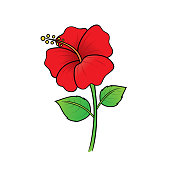 Illustration of red flowers seen in the countryside Can be used as teaching material for teachers to make children's books. Or have parents use to make documents Accompany the lesson.