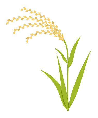 Illustration of rice ear