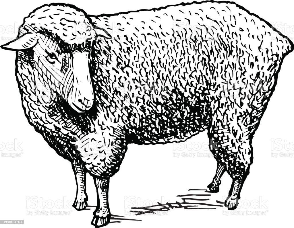 illustratie van schapen royalty free illustratie van schapen stockvectorkunst en meer beelden van antiek - ouderwets