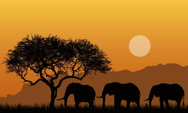 ilustraciones, imágenes clip art, dibujos animados e iconos de stock de ilustración de siluetas de paisajes montañosos de safari africano con árbol, hierba y tres elefantes. debajo del cielo anaranjado con el sol-vector - viaje a áfrica