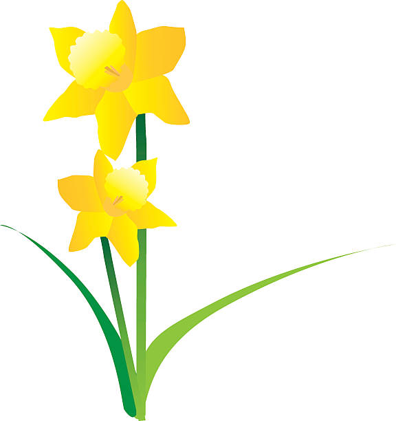 Royalty Free Daffodil Clip Art, Vector Images ...