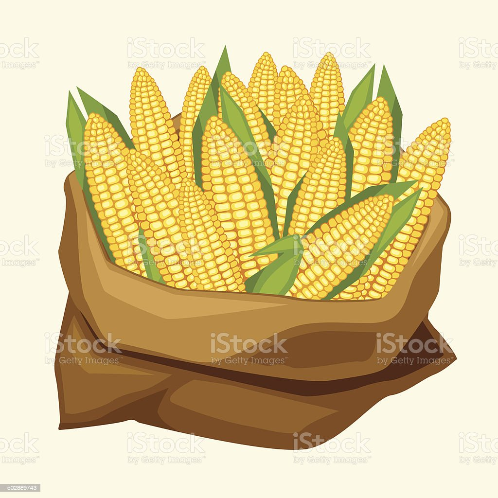 Illustration of stylized sack with fresh ripe corn cobs. vector art illustration