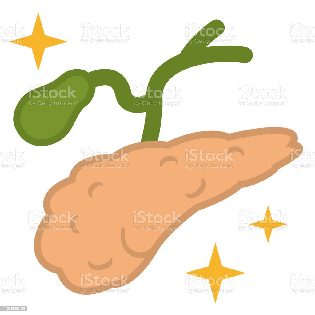 Illustration Of The Gall Bladder And Pancreas Stock Vector Art