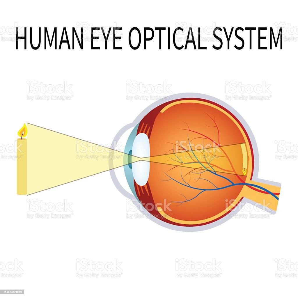 Illustration of the human eye optical system. vector art illustration