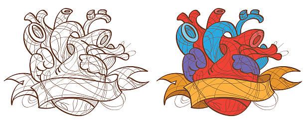 Illustration of the human heart vector art illustration