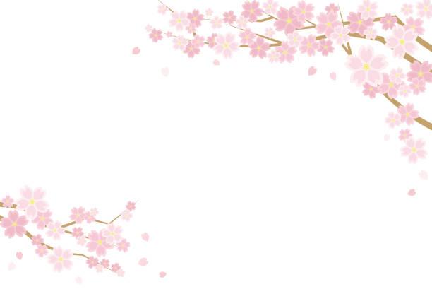 桜と春の風景のイラスト - 背景は白です - 風景形式の水平書き込みのために - 桜点のイラスト素材/クリップアート素材/マンガ素材/アイコン素材