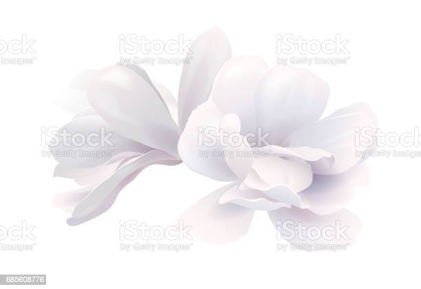Illustration of two white beautiful magnolia spring flower isolated vector id685608776?b=1&k=6&m=685608776&s=612x612&h=8m0dyl6k77mkv  mnqaqzgndzsvti2osfls1bdpjbpe=