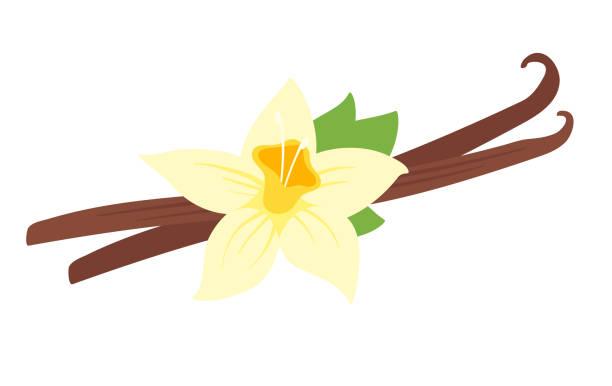 stockillustraties, clipart, cartoons en iconen met illustratie van vanille bloem - vanille