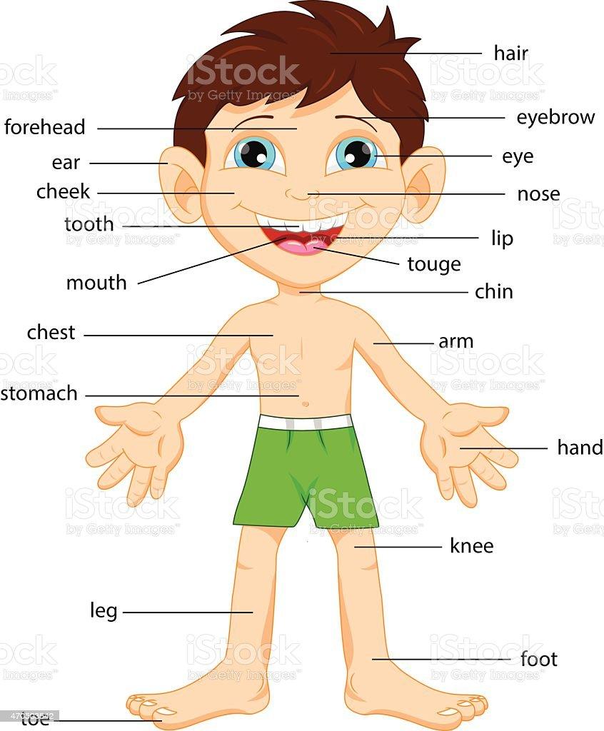 Illustration of vocabulary part of body vector art illustration
