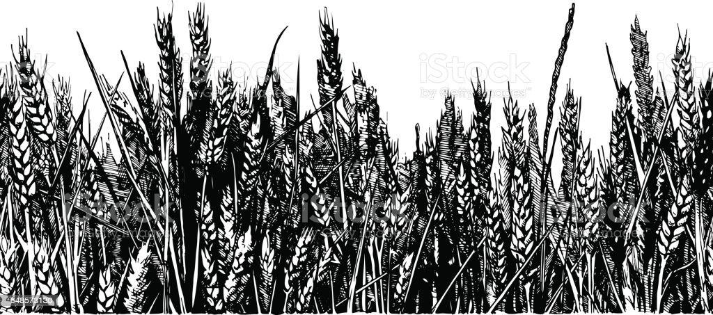 illustration of wheat field vector art illustration