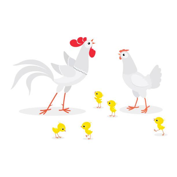 Illustration de famille blanche de poulet isolée sur le fond blanc - Illustration vectorielle