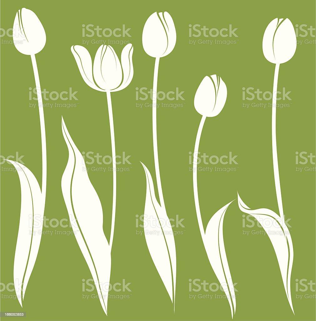 Illustration of white tulips on green background vector art illustration